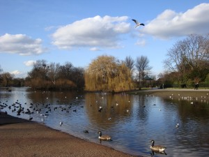 Regent's Park Lake - From Flickr: By irishtravel